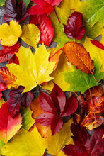 Natural Fall Leaves Close Up On Gray Stone Background