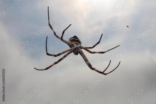 Plakat pająk pająk