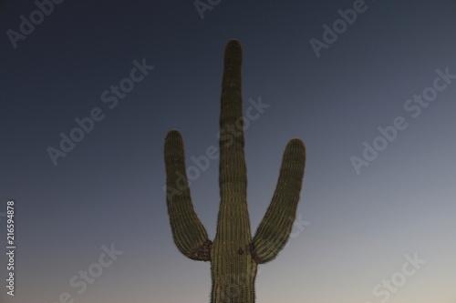 Tuinposter Cactus Saguaro Cactus