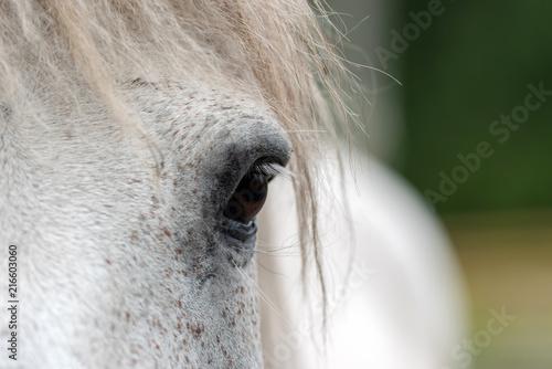 Fotografie, Tablou  White horse eye