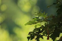 Natuurlijke Groene Achtergrond