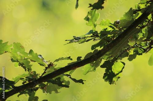 Fototapeten Natur natuurlijke groene achtergrond