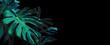 Leinwandbild Motiv Monstera deliciosa or swiss cheese plant tropical leaves on black background