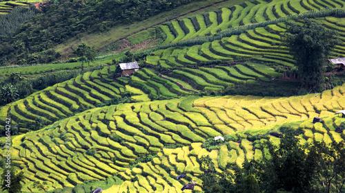 Fotobehang Rijstvelden Vietnam terrace rice field
