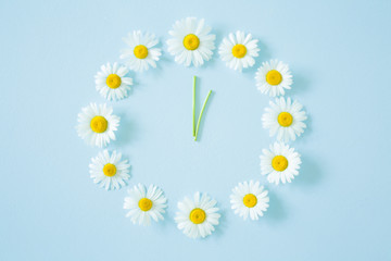 Flower clock created from fresh, beautiful white daisies on pastel blue background. Wild flowers. Soft light color. Time concept.