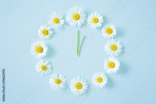 Obraz Flower clock created from fresh, beautiful white daisies on pastel blue background. Wild flowers. Soft light color. Time concept. - fototapety do salonu