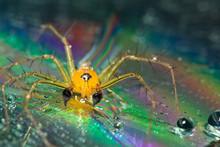 Macro Spider Yellow Background...