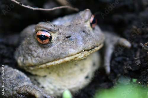 Tuinposter Kikker Frog in the clay.