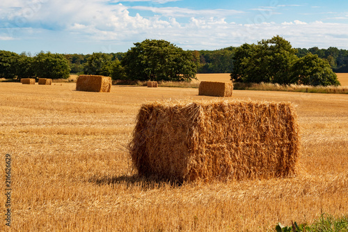 big straw ball on the ground in the summer Canvas Print