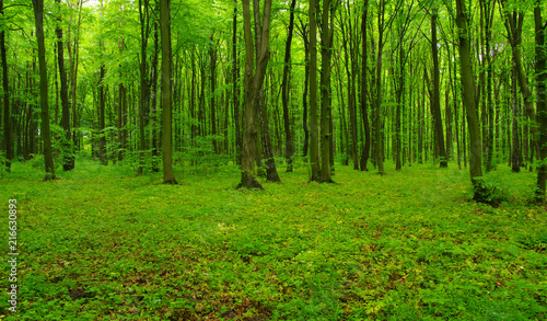 green forest in spring #216630893