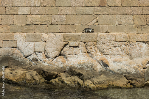 Cat walking in medieval or Roman ruins the mediterranean sea borders