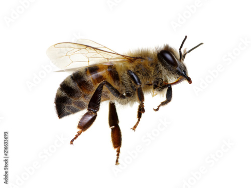 Tuinposter Bee Bee isolated on white