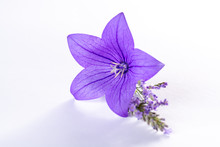Elegant Small Boutonniere From...