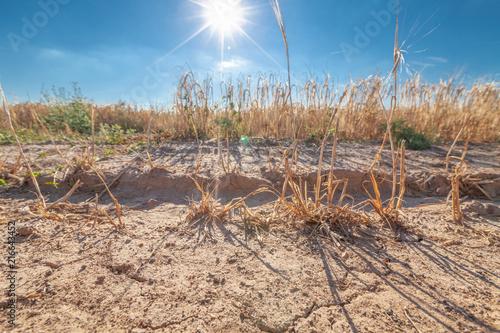 Fényképezés  Sonne Getreide Trockenheit Ernteausfall