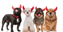 Four Cute Dogs With Red Devil Horns Standing And Sitting