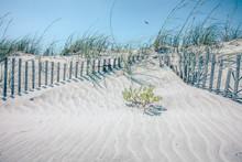 Grassy Windy Sand Dunes On The...