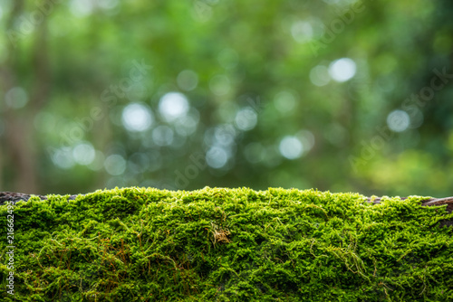 Fotomural Moss in the rain forest background