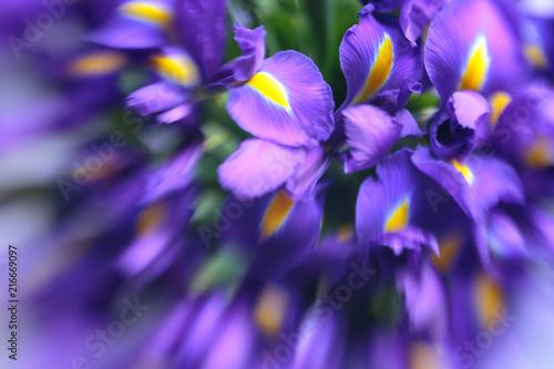 Spoed Foto op Canvas Iris Purple delicate iris flowers background
