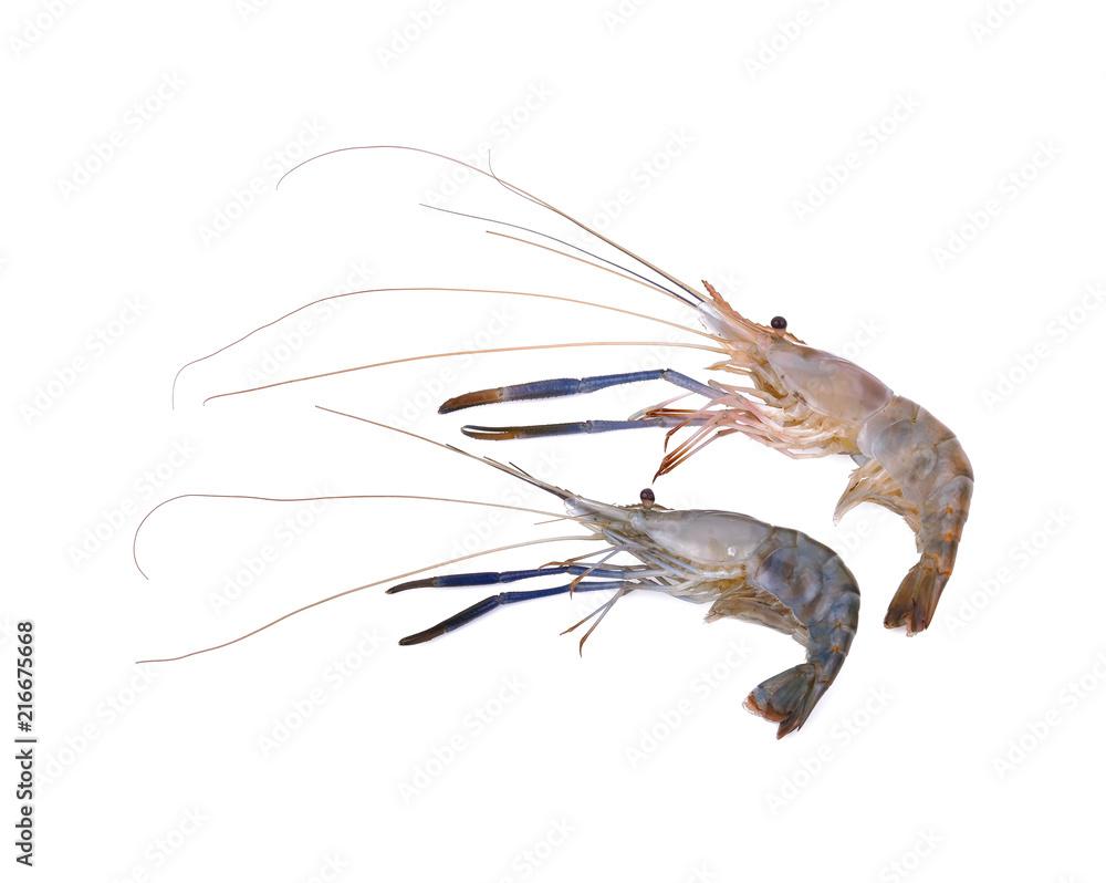 Fotografía Giant freshwater prawn, Fresh shrimp isolate on