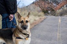 Portrait Of Dog With Man On Co...