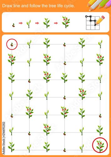 Draw line and follow the tree life cycle Fototapeta