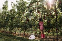 Full Length Of Girl Harvesting...