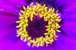 Top view of purple flowers. Flower petals close up. Macro flower