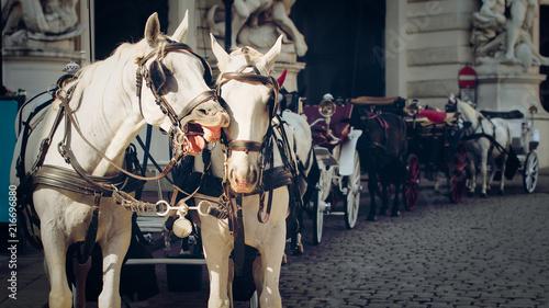 fototapeta na lodówkę Vienna, Austria, traditional two-horse carriage