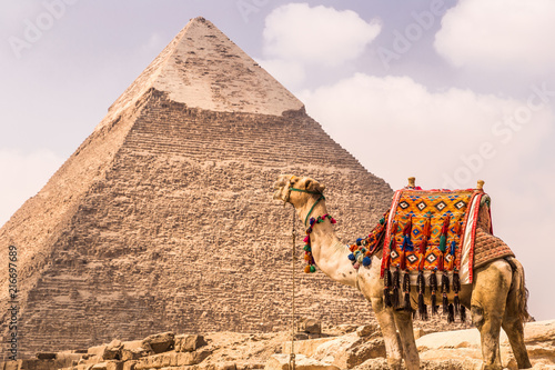 A camel with The Pyramids at the background, Cairo, Egypt. Fototapeta