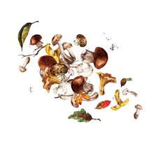 Mushrooms. Watercolor Illustra...
