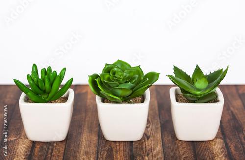 Spoed Foto op Canvas Cactus Green plants on wooden background