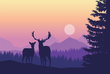 Two Deer Standing In Coniferou...