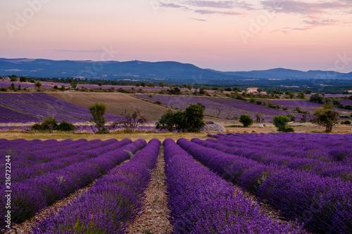 Garden Poster Lavender Champ de lavande, coucher de soleil. Ferrassières, Provence, France.