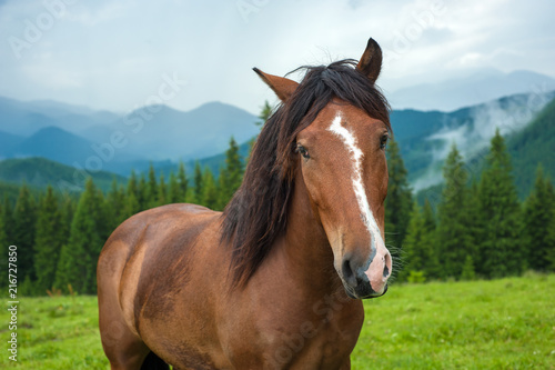 Canvas Prints Horses Grazing horse at high-land pasture at Carpathian Mountains after rain. Picture of beautiful green pasture on a background of mountains.
