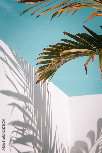 Palm tree leaves against turquoise sky and white wall. Pastel colors, creative colorful minimalism. Copy space for text, vertical