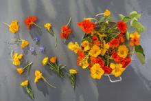 Basket Of Nasturtium Plant Wit...