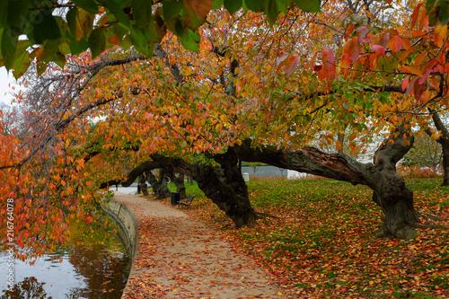 Washington DC in autumn - Tidal Basin and Jefferson Memorial - United States of America (USA)