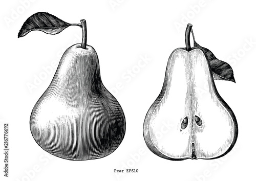 Valokuva  Pear fruit hand draw vintage clip art isolated on white background