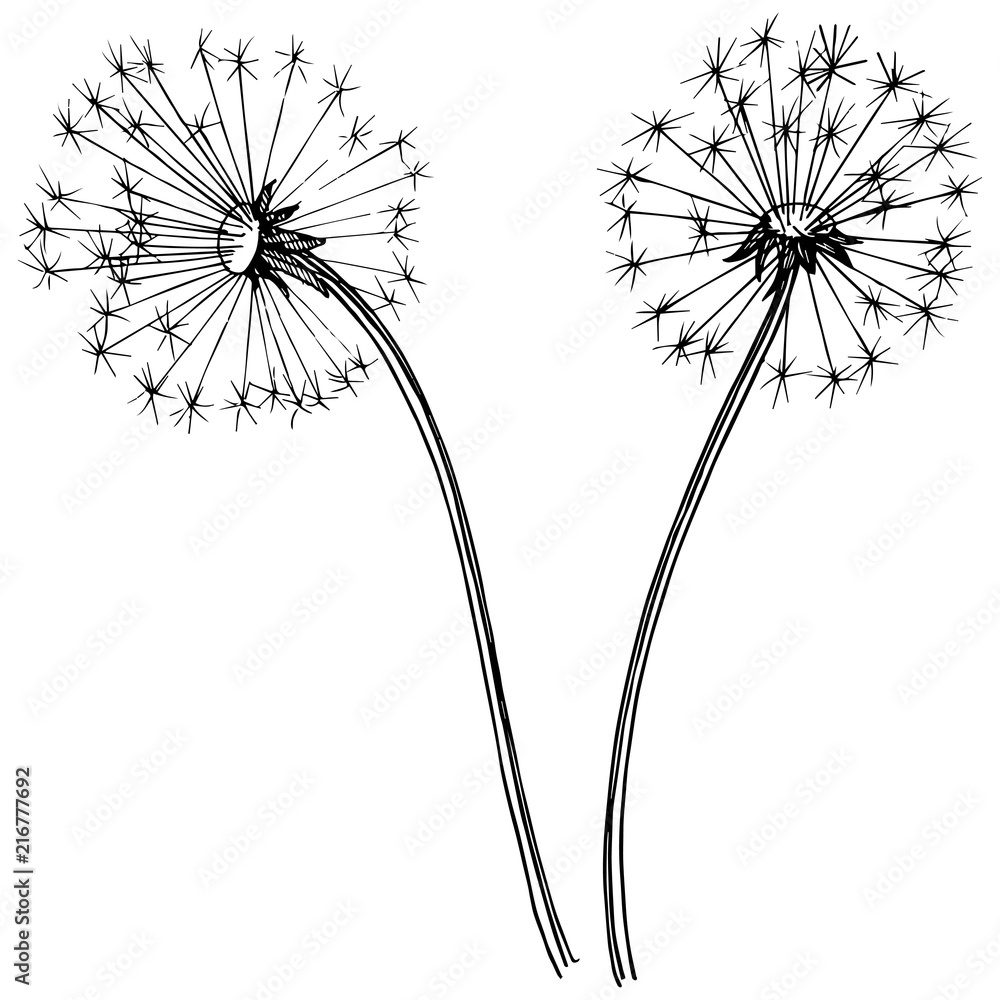 Fototapety, obrazy: Wildflower dandelion in a vector style isolated. Full name of the plant: dandelion. Vector flower for background, texture, wrapper pattern, frame or border.