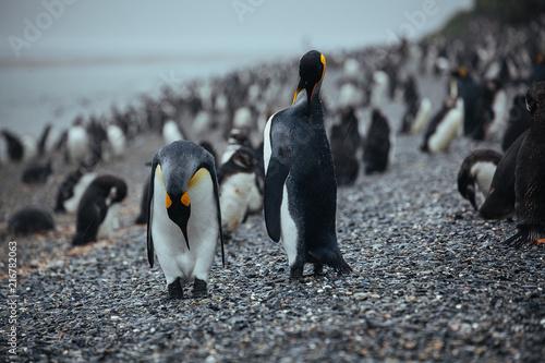 Poster Pinguin Pinguin