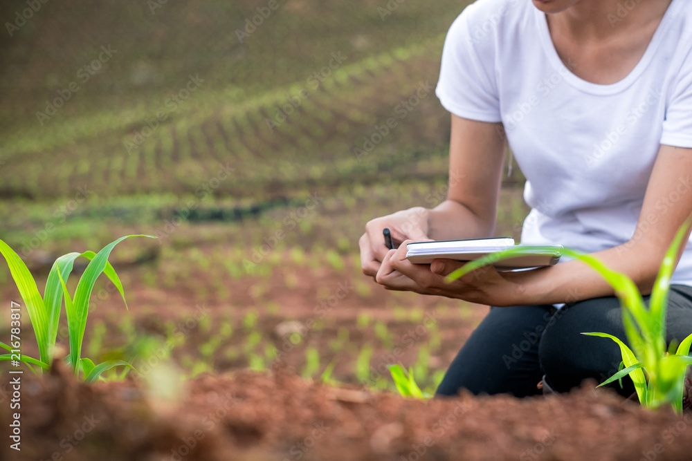 Fototapety, obrazy: Beautiful woman plant researchers are checking and taking notes in corn seedlings fields.