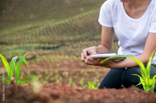 Photo Beautiful woman plant researchers are checking and taking notes in corn seedlings fields
