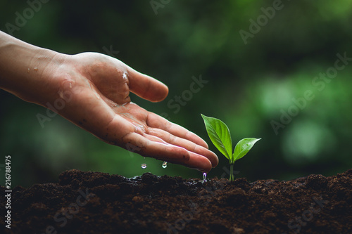 Poster Vegetal Plant tree in neutral background Close-Up Of Fresh Green Plant,Young hand Tree in hand