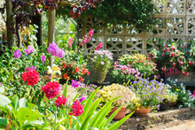 Beautiful Backyard Garden Full Of Colorful Flowers In Pots And Containers With The Stone Wall On The Back, Selective Focus
