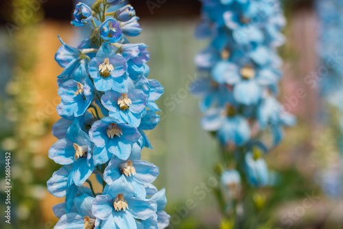 Canvastavla Big flower delphinium