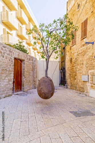 Poster de jardin Moyen-Orient Suspended Orange Tree in Yafo, Israel