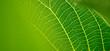 Blatt mit Adern. Symbol für Vernetzung, Gesundheit und Natur