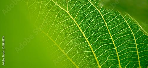 Fotografía  Blatt mit Adern. Symbol für Vernetzung, Gesundheit und Natur
