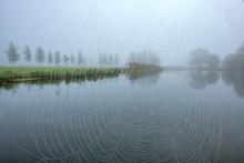 Schlehdorf, Kochel Lake, Bad Tölz-Wolfratshausen District, Upper Bavaria, Germany, Europe. .Cobweb With Morning Dew At Boathouse Jetty At Kochelsee