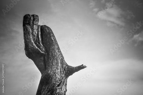 Staande foto Grijs In joy and in sorrow…